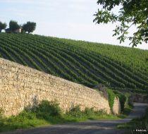 Millery-vigne-∏-Pascal-JACQUET-11